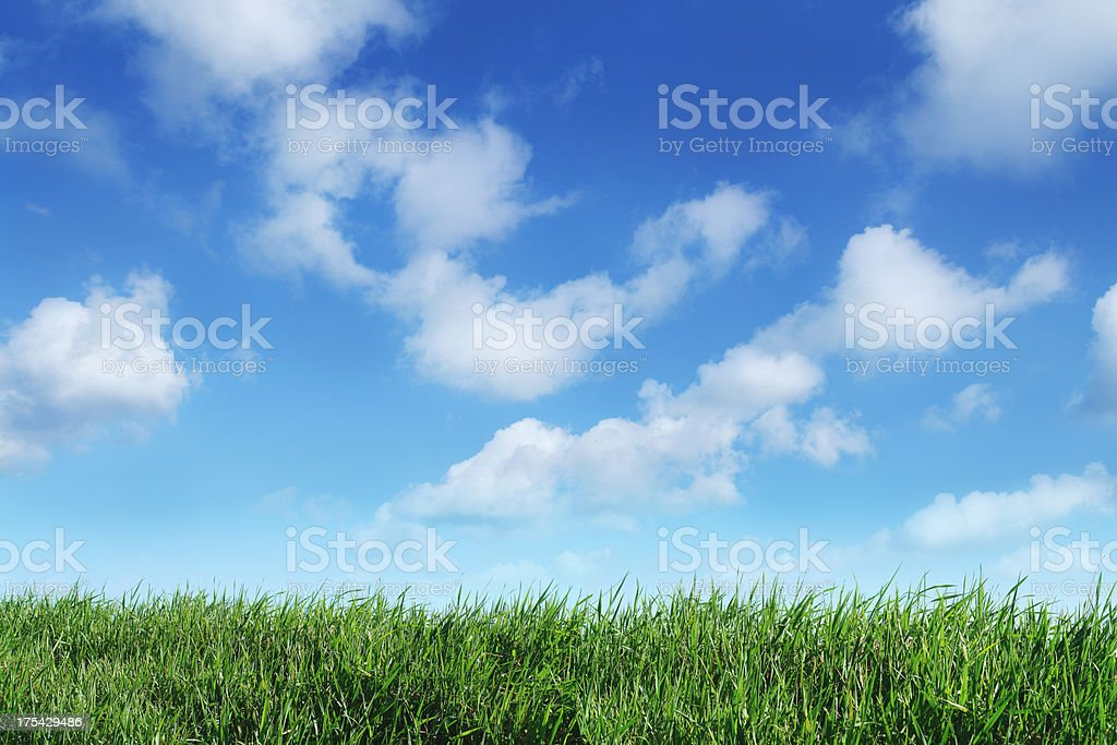 Green grass horizon with blue sky background royalty-free stock photo