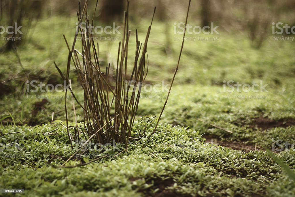 green grass image stock photo