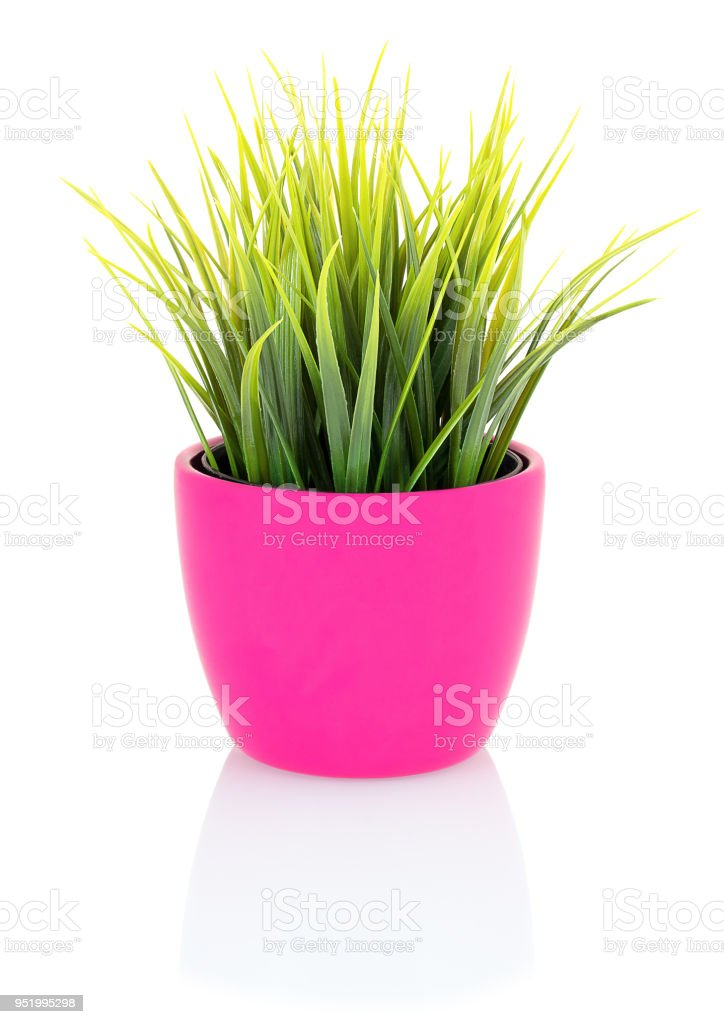 Green grass in a pink pot isolated on white background with shadow reflection. Green grass in flowerpot made of porcelain. Green grass in clay pot on white backdrop. Decorative grass in flowerpot. stock photo