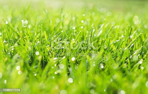 Green grass in morning dew. Selective focus. Close up shot with beautiful natural bokeh. Water drops after rain