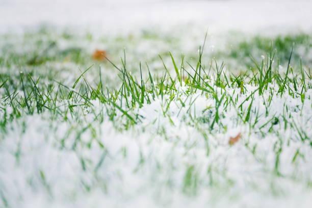 Grüner Rasen im Schnee, Hallo Frühling, Goodbye Winter Konzept – Foto