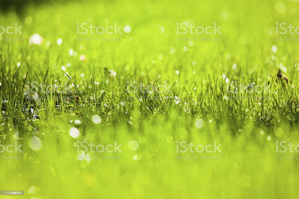 Green Grass in Spring, Natural Background royalty-free stock photo