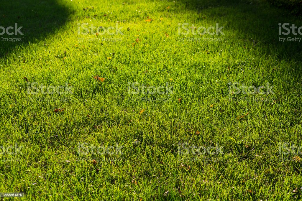 green grass in summer in field stock photo