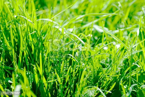 Green grass in sun light.