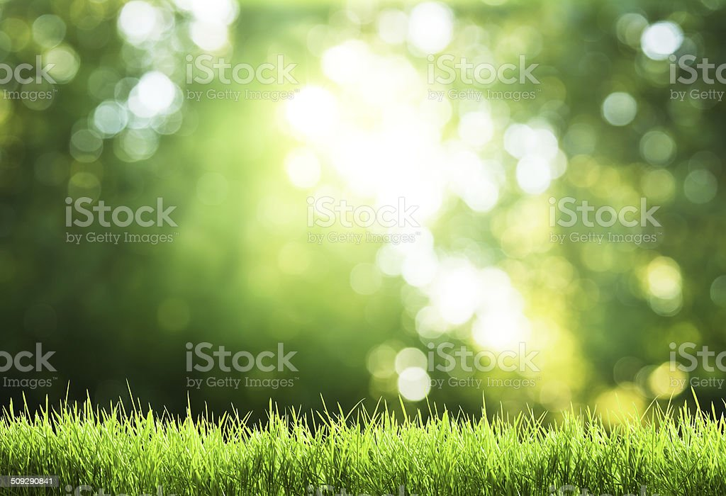 green grass in sunny forest stock photo