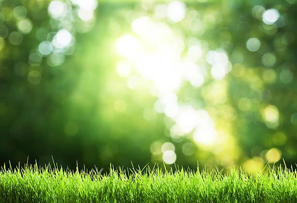 芝生の上で太陽の森 - 木漏れ日 ストックフォトと画像