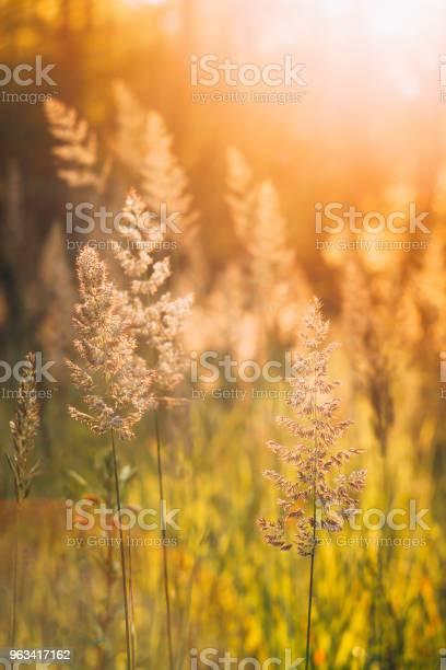 Zielona Trawa W Słońcu Słońca - zdjęcia stockowe i więcej obrazów Bez ludzi