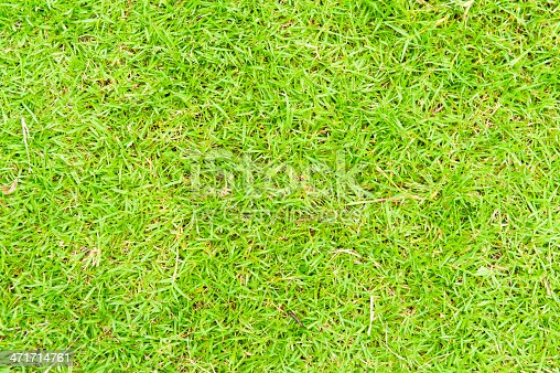 istock Green grass in the background 471714761