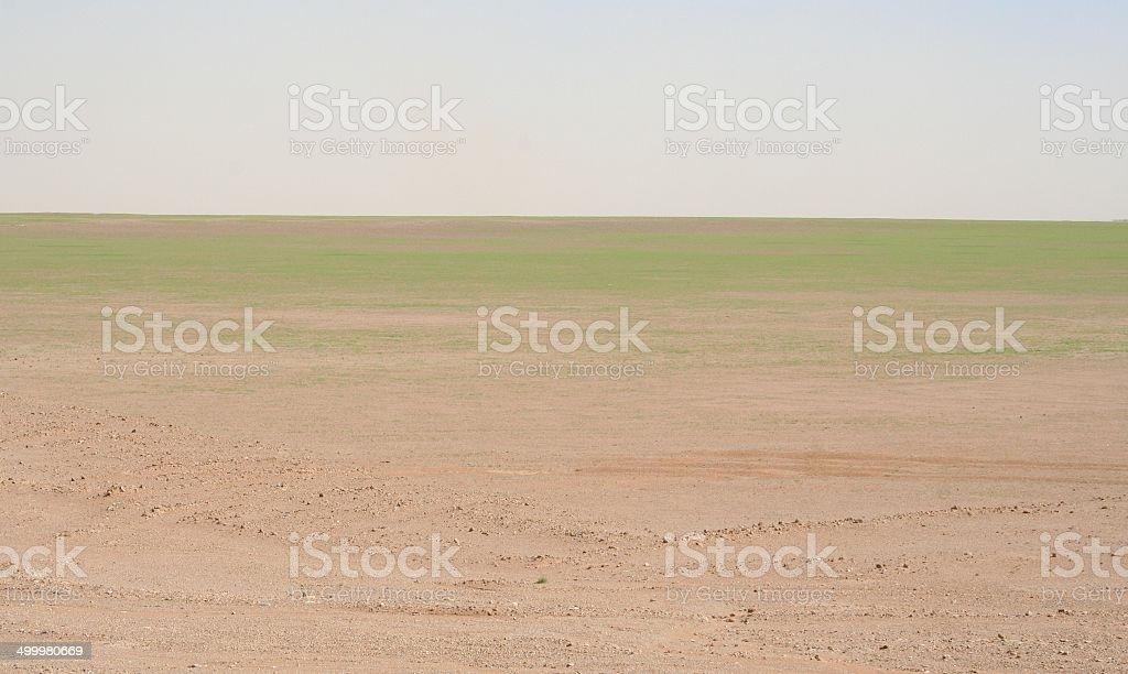 Green Grass in the Desert, Sossusvlei, Namibia stock photo