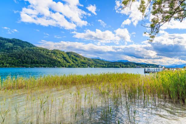 green grass im wörthersee seewasser im sommer, österreich - wörthersee stock-fotos und bilder