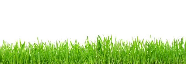 흰색 배경에 고립 된 녹색 잔디 스톡 사진