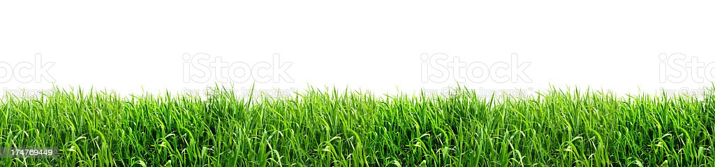 XXL Green Grass Isolated on White Background royalty-free stock photo