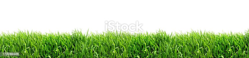Panorama XXL - Green Grass Isolated on White Background