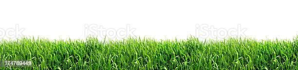 Green grass isolated on white background picture id174769449?b=1&k=6&m=174769449&s=612x612&h=x6van77u9ss4d8fr77i1yk9x7xqx0fw7t1oaxhzmfae=