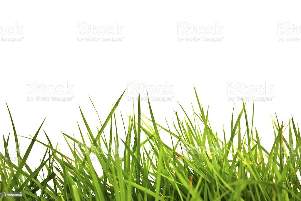 green grass isolated on white background royalty-free stock photo