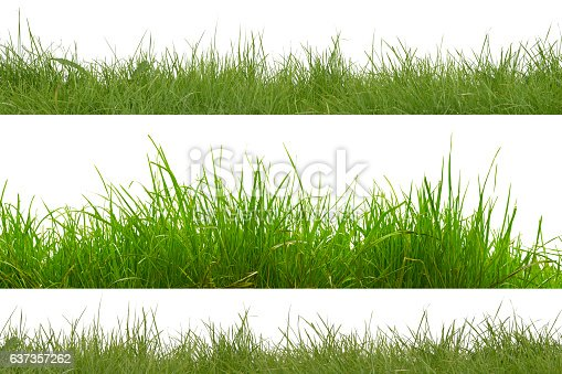 green grass isolation on the white backgrounds.