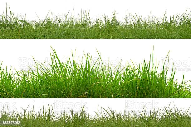 Green grass isolated on white background picture id637357262?b=1&k=6&m=637357262&s=612x612&h=bvyqhx680vmk uk es2nrikyzxxi 9qwniuyyyd1q k=