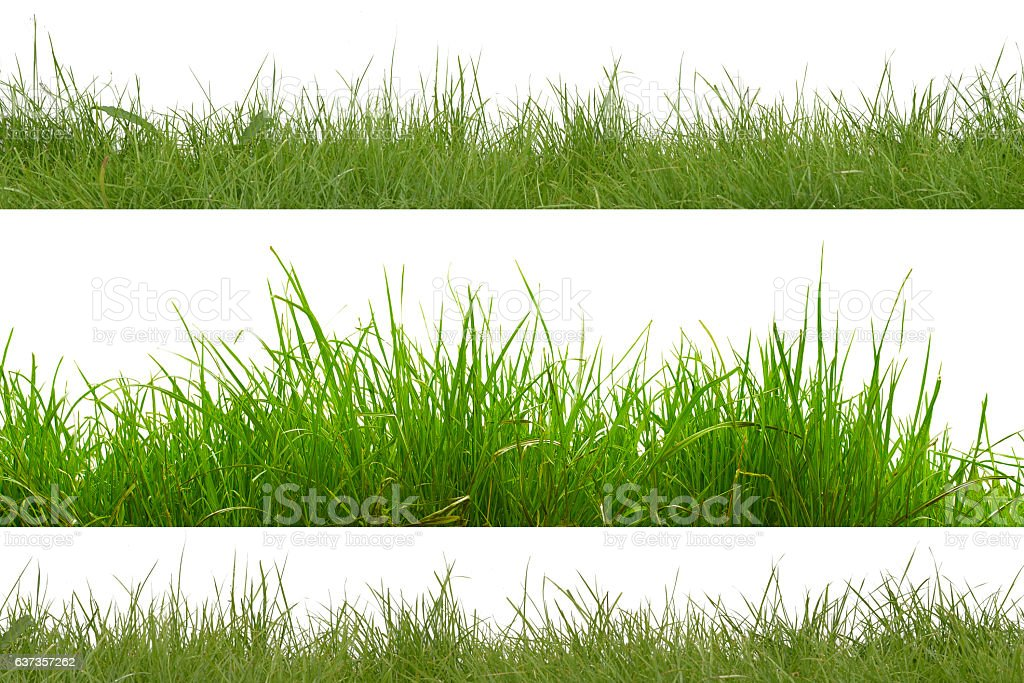 green grass isolated on white background. - foto de stock