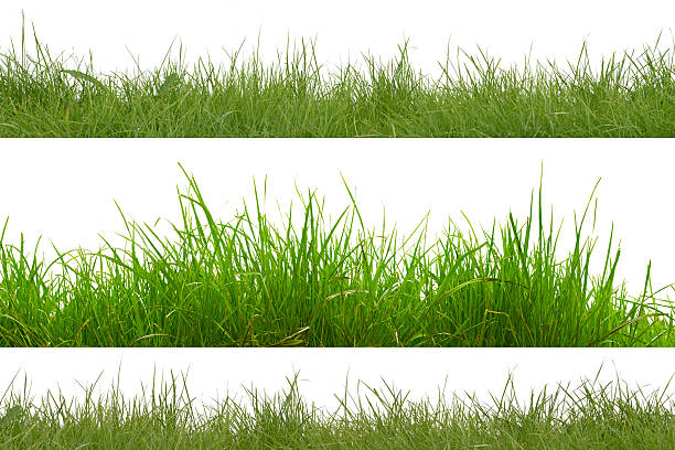 green grass isolated on white background. - çim stok fotoğraflar ve resimler
