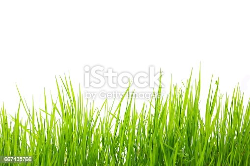 Grass on the field.