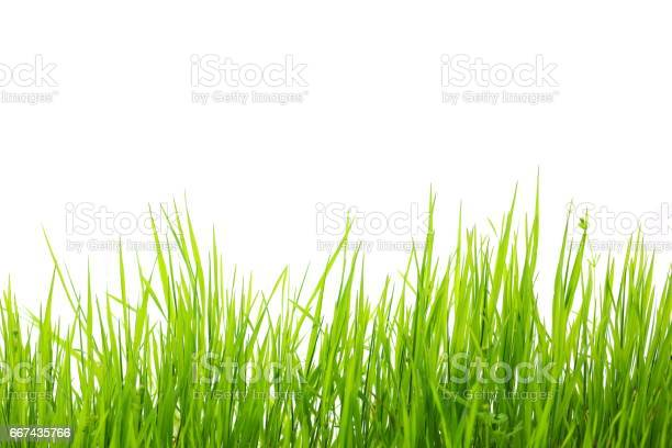 Green grass isolated on white background picture id667435766?b=1&k=6&m=667435766&s=612x612&h=3e5rmfta305e04efp7r9fbjkovqf7nxirllkg6c8cki=