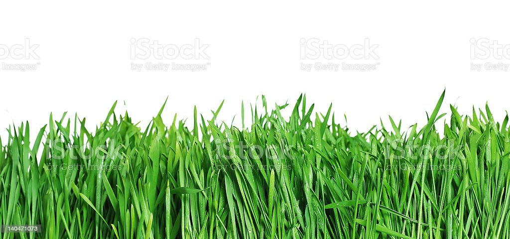 Green grass isolated [with clipping path] royalty-free stock photo