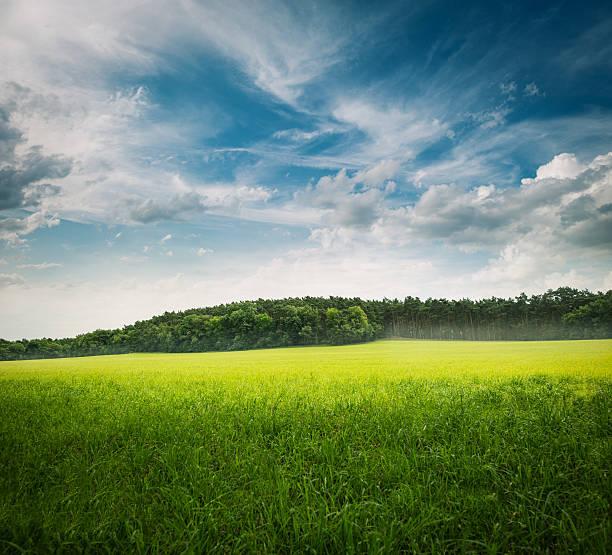 grüne gras landschaft - mitteleuropa stock-fotos und bilder