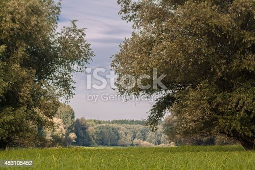 Green grass scenic landscape with willows and reed. Danube river, Serbia