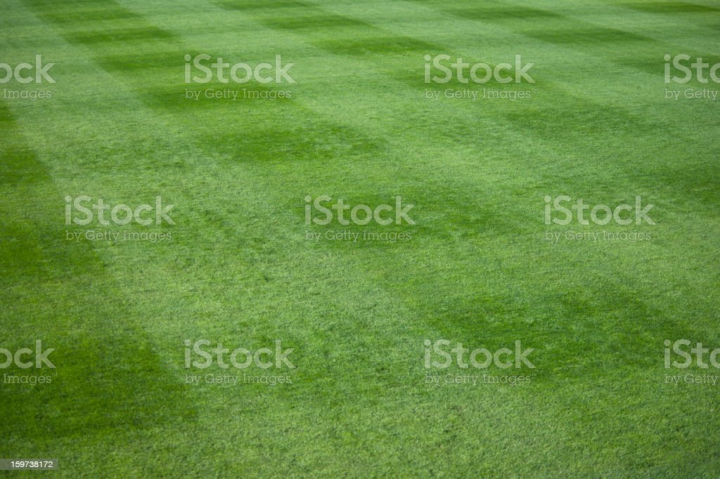 Green grass lawn at a live sporting event stock photo