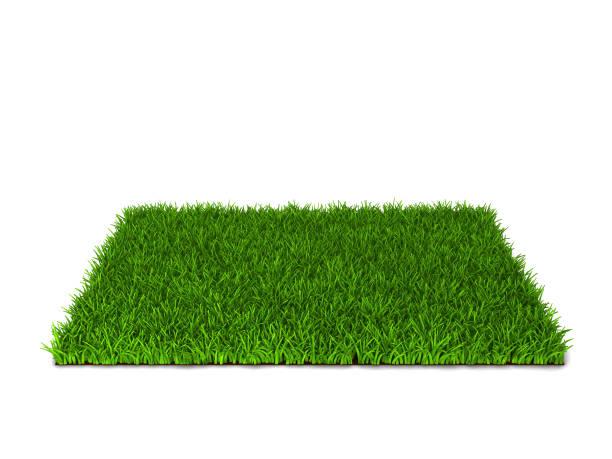 Vert pelouse - Photo