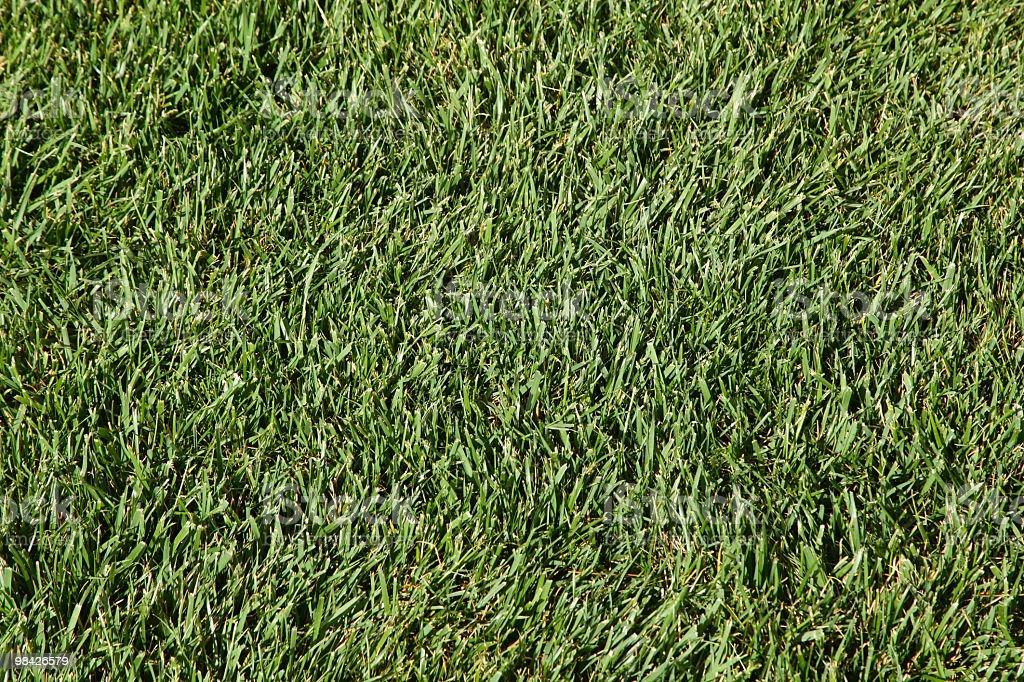 Erba verde prato foto stock royalty-free