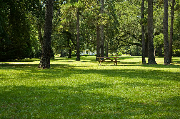 Green Grass Lawn with Picnic Table and Trees stock photo