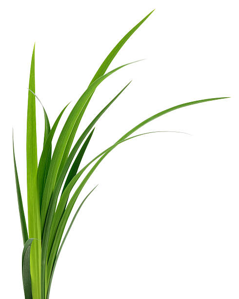 Green grass leaves. stock photo