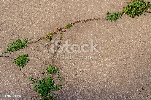Green grass making its way through a crack of asphalt.