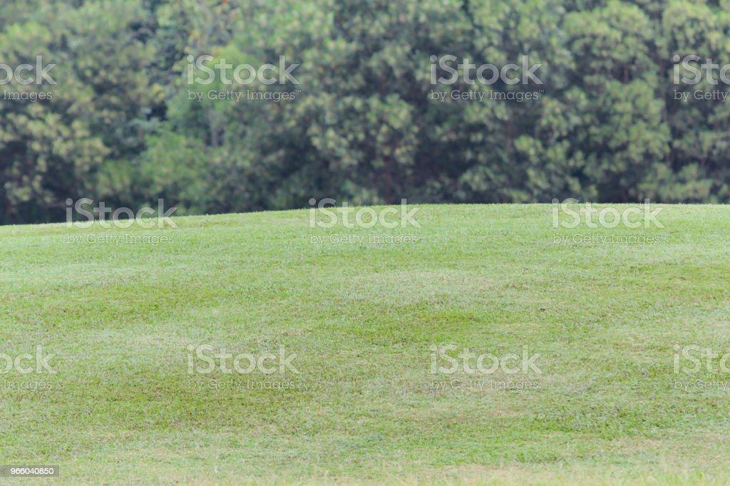 Grüne Wiese Wiese Natur Hintergrund - Lizenzfrei Agrarbetrieb Stock-Foto