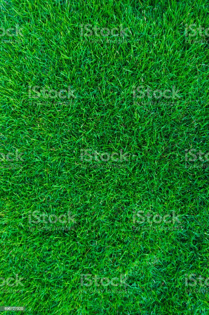 Green grass natural background texture from above stock photo
