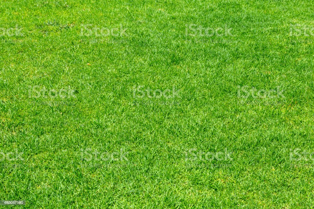 Green grass. Natural background texture foto de stock royalty-free