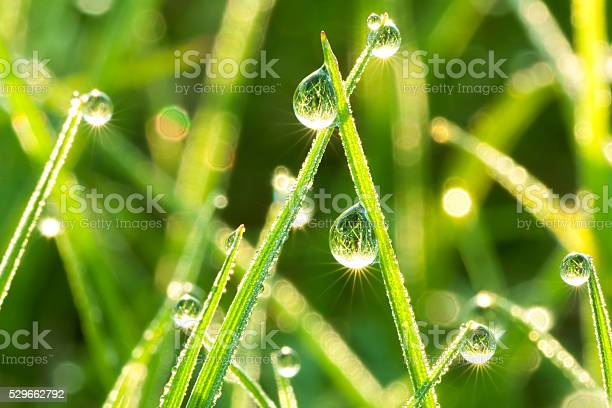 Photo of green  grass on a lawn