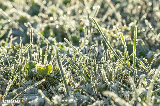 istock green grass on a meadow covered with snow 876896362