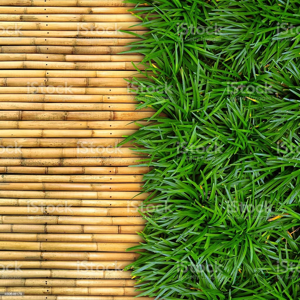 Green grass on bamboo background. stock photo