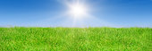 Green grass on blue clear sky, spring nature theme, Panorama