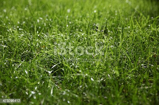istock Green grass on green background 473295412