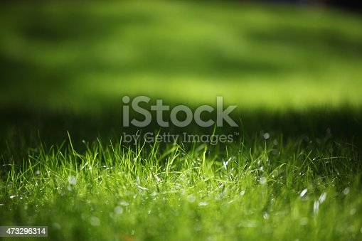 istock Green grass on green background 473296314