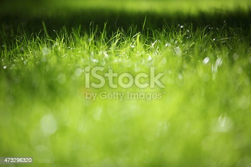 istock Green grass on green background 473296320