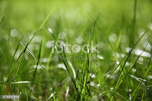 istock Green grass on green background 473307816