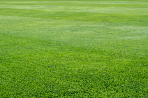 green grass on playing field background