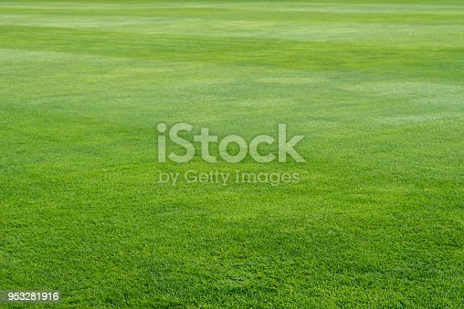 green grass on playing field background selective focus
