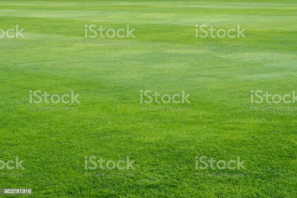 Green grass on playing field background picture id953281916?b=1&k=6&m=953281916&s=612x612&h=306t6t4 fbcusv9xthv4y6oqshkjbpqosup85uuqol4=