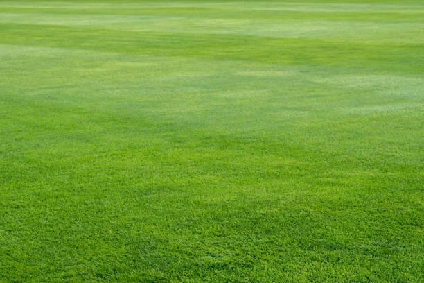 grama verde no fundo do campo de jogo - gramado terra cultivada - fotografias e filmes do acervo