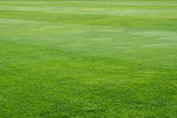 green grass on playing field background stock photo